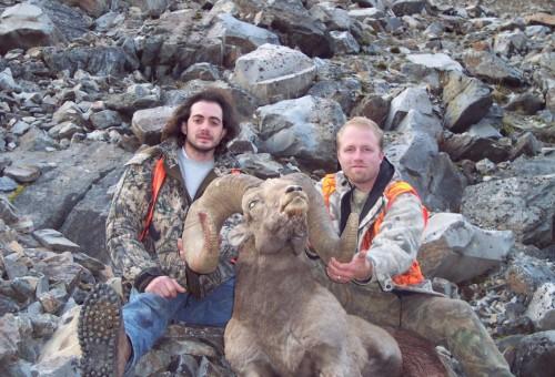 Big Horn sheep hunting Montana