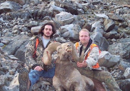 Big Horn sheep hunting Montana