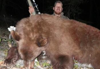 Bear hunt 2012