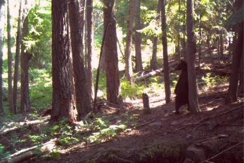 Montana Wild life through Trail Cam