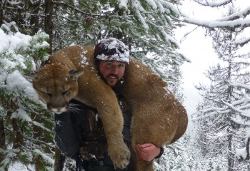 Montana cougat best hunts