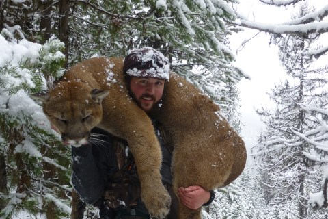 Mountain Lion Hunts 2012
