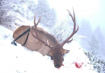 Elk Hunts with Cody Carr 4-6 (12)