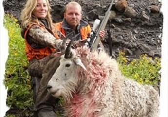 Mountain Goat hunts montana