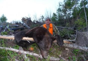 best bear hunts montana (13)