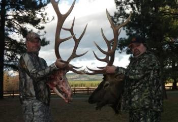 elk hunting trips montana 12 (2)