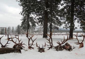 elk hunting trips montana 2010 (2)