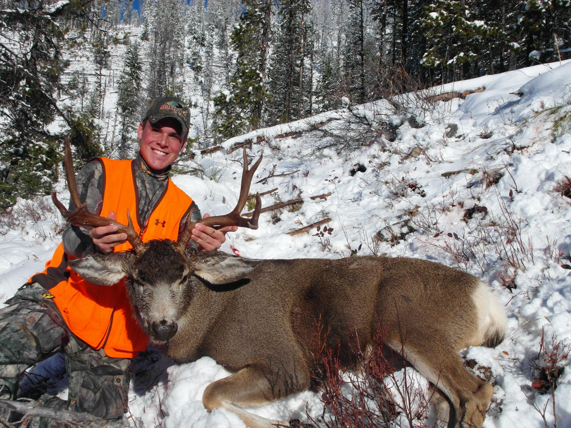Mule Deer - Images   The Hole Picture
