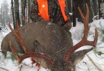 mule deer hunts 13 (3)