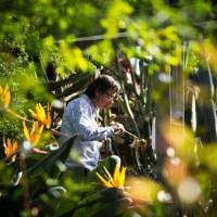 MaerzMusik im Botanischen Garten - John Cage: Branches / Inlets