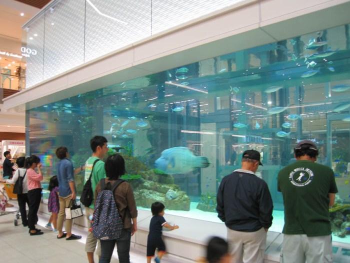 rycom_aquarium