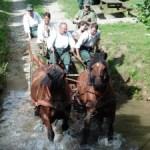 montormel chevaux
