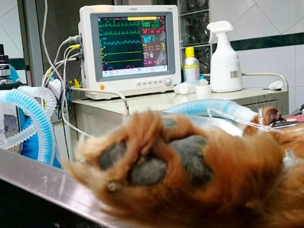 hospitalveterianriolucky-17