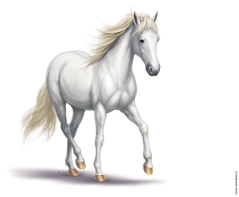 3d Kickboxing Wallpaper Download Wallpaper White Horse White Horse Photo