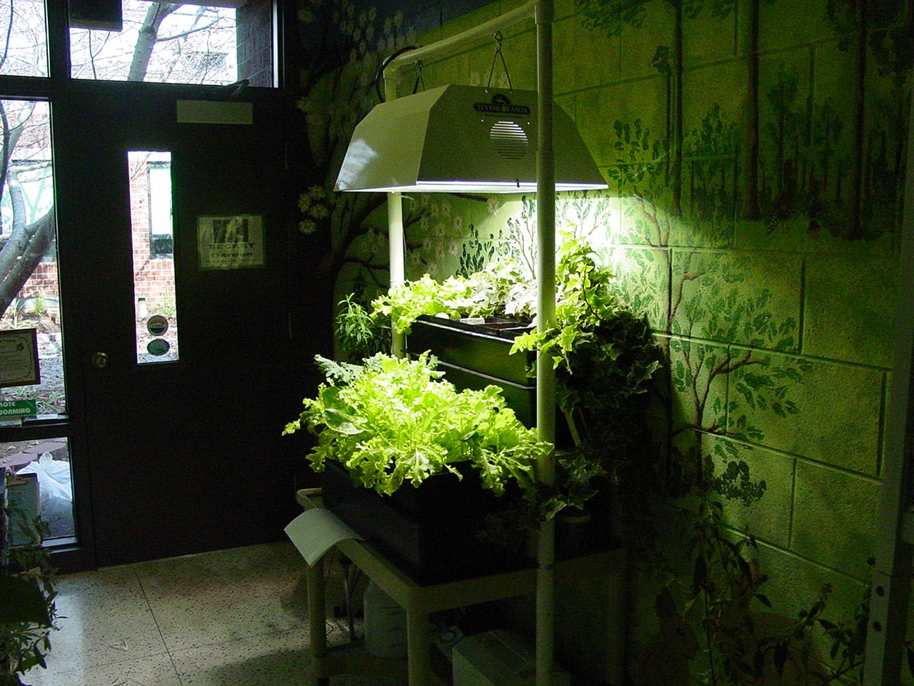 Grow Lights For Indoor Plants Hydroponics For Beginners Hydroponics Blog Hydroponics