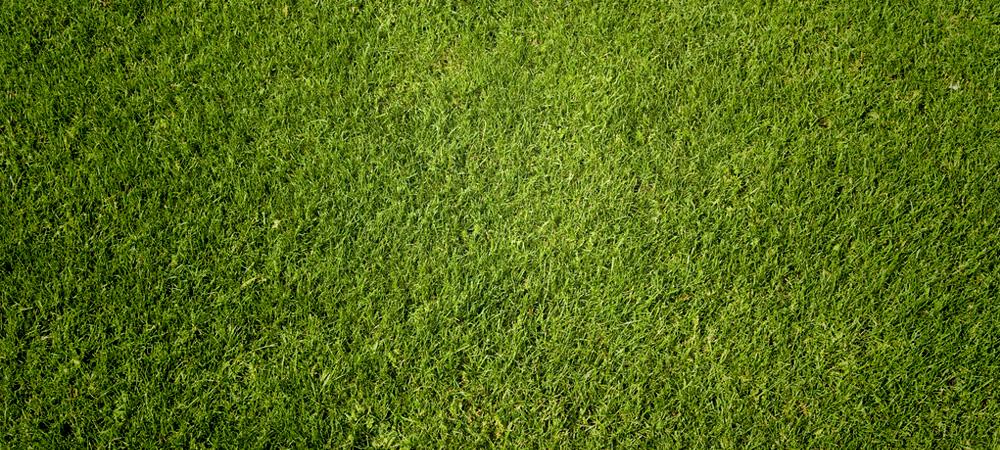 grass-slider