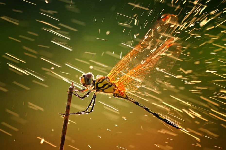Image of Winners of the 2011 National Geographic Photo Contest