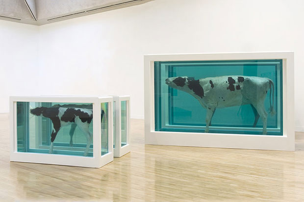 Image of Damien Hirst Retrospective @ Tate Modern