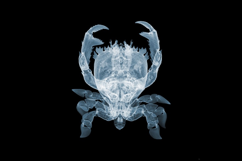 """Image of Nick Veasey """"It's What's on the Inside That Counts"""" Exhibition @ Richard Goodall Gallery"""