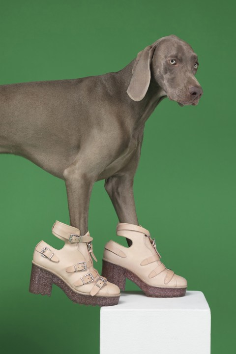 "Image of ""Hat Dogs"" by William Wegman for Acne Studios"
