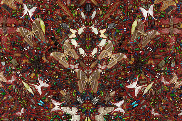 Image of Damien Hirst to Collaborate with Alexander McQueen