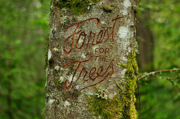 "Image of Public Art Project ""Forest for the Trees"" Launches in Portland, Oregon"