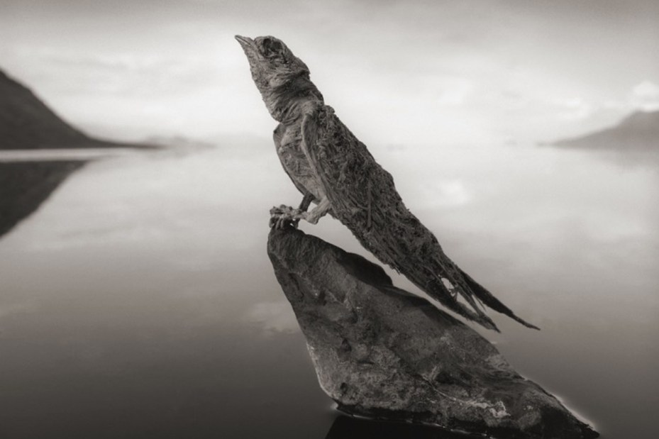 Image of The Calcified Animals of Lake Natron, Tanzania