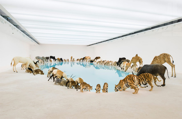 "Image of Cai Guoqiang ""Falling Back to Earth"" Exhibition @ Queensland Art Gallery"