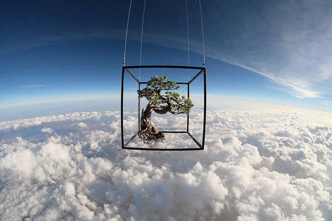 Image of Azuma Makoto Sends Plants to Space