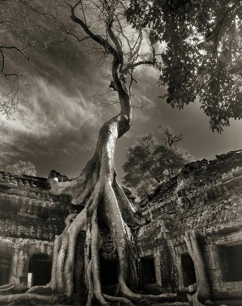 vecchi alberi 17