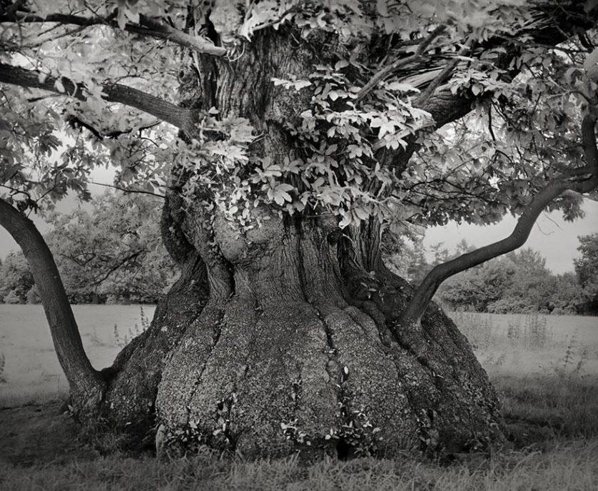 vecchi alberi 7