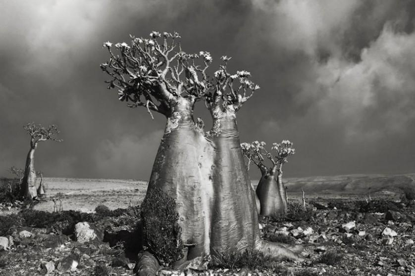 vecchi alberi 8