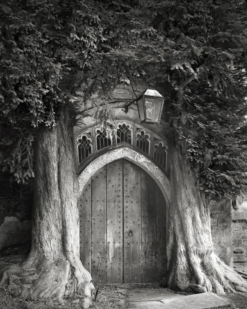 vecchi alberi 9