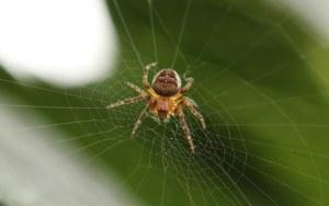 araignée phobie guérir avec l'hypnose thérapeutique