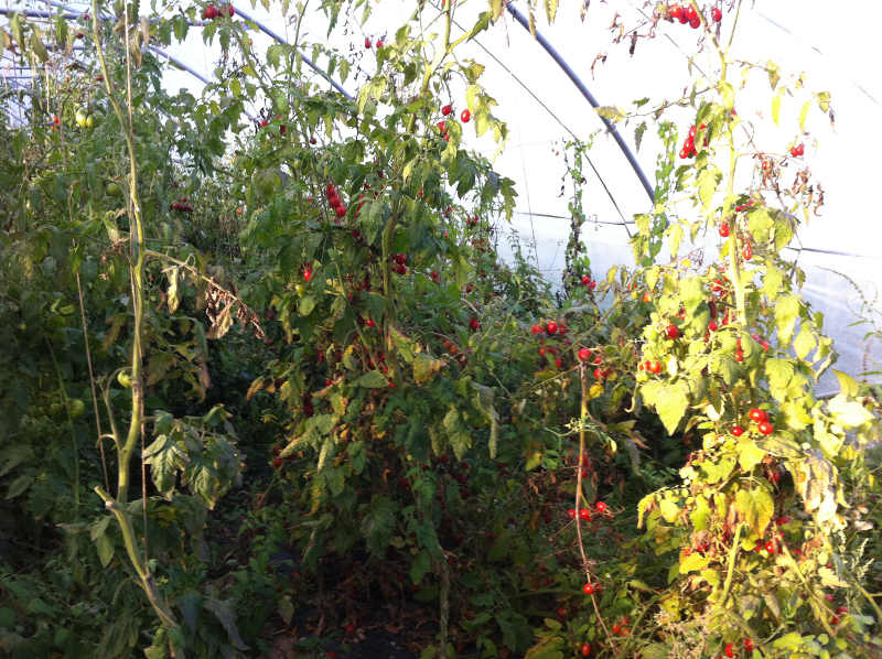 Fruits bio de l'amap
