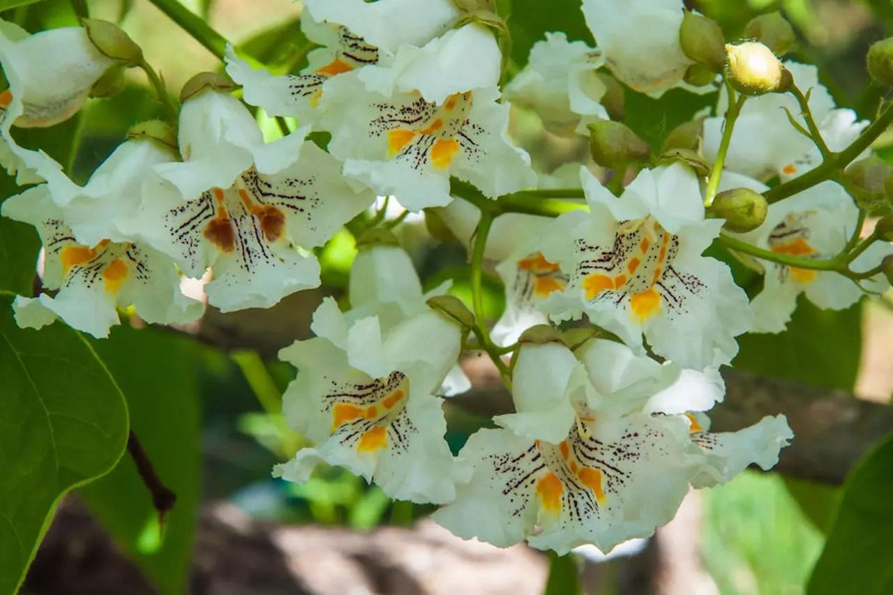 Antizanzare da giardino trattamento antizanzare giardino