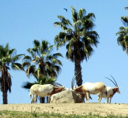 Visit Safari Park San Diego