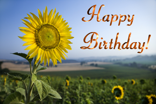 Keep Smile Quotes Wallpaper Birthday Sunflower Free Flowers Ecards Greeting Cards