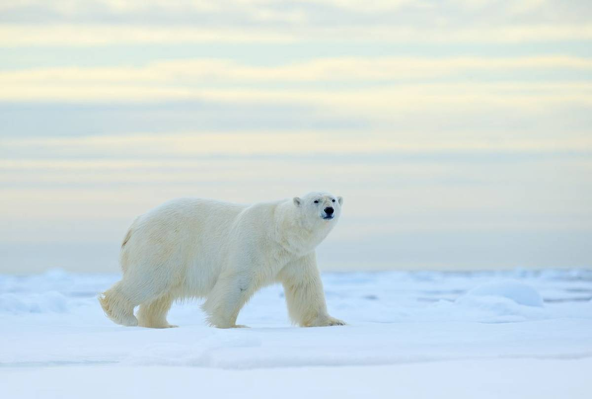 France Habitation Service Client Spitsbergen Realm Of The Polar Bear Naturetrek