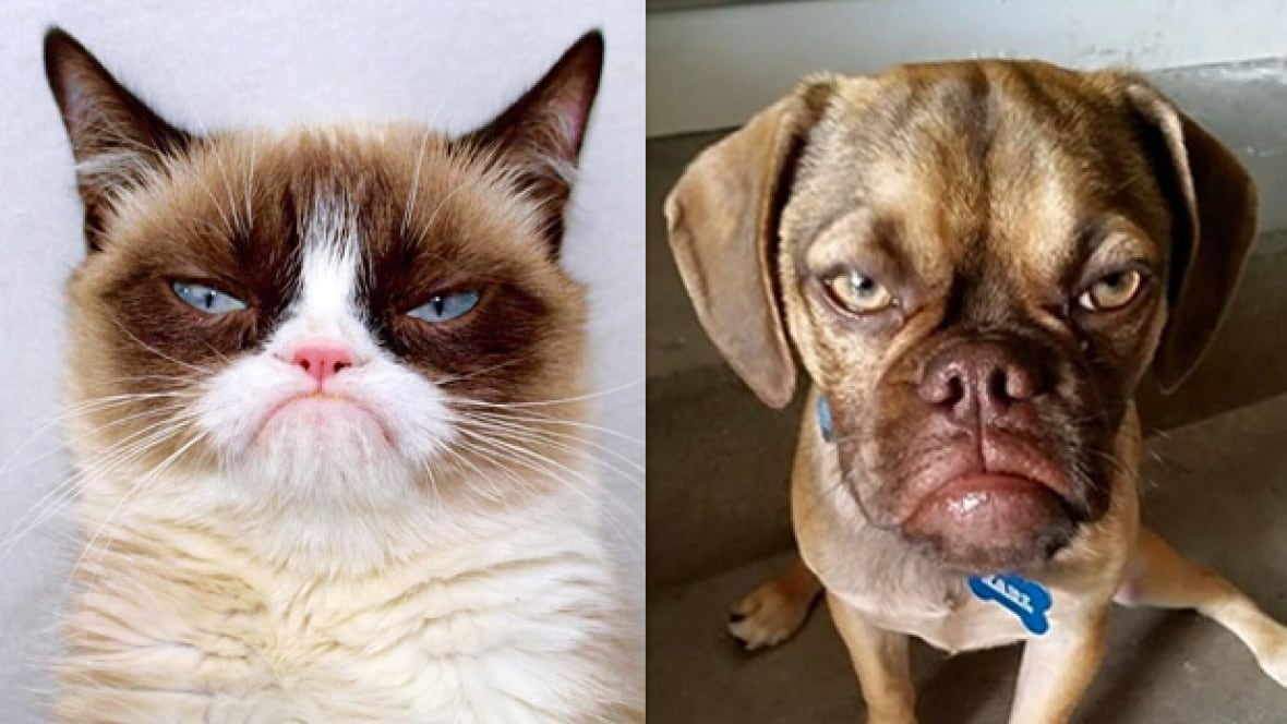 Kung Fu Panda Wallpapers With Quotes Pouting Puppy Ends Grumpy Cat S Reign As The Internet S