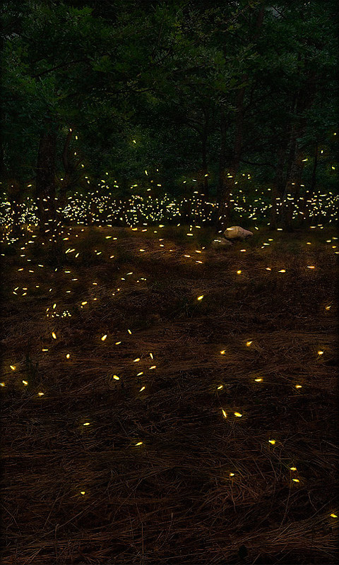 Fireflies Live Wallpaper Free Android Live Wallpaper