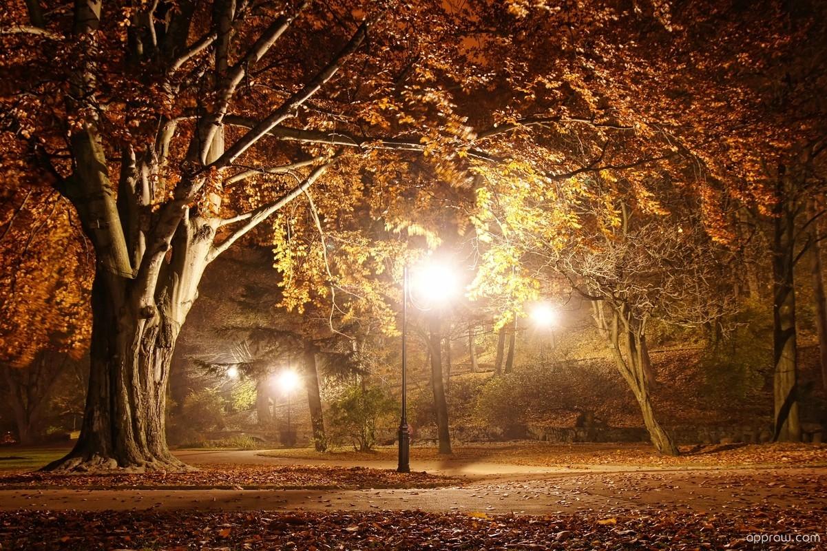 Falling Leaves Live Wallpaper Full Apk Autumn Park At Night Wallpaper Download Autumn Hd