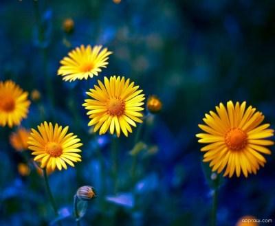 Yellow Flowers HD Wallpaper download - Flower HD Wallpaper - Appraw
