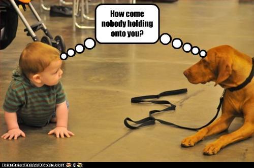 Cute Puppy Pics Wallpaper I Has A Hotdog Vizsla Funny Dog Pictures Dog Memes