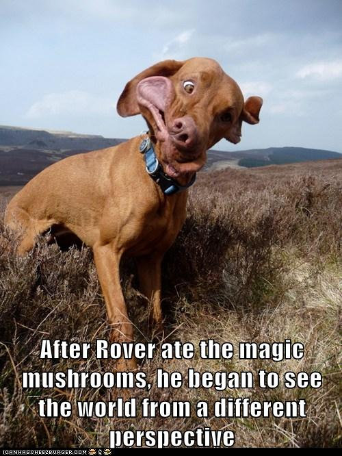 Very Very Cute Wallpapers Magic Mushrooms I Has A Hotdog Dog Pictures Funny