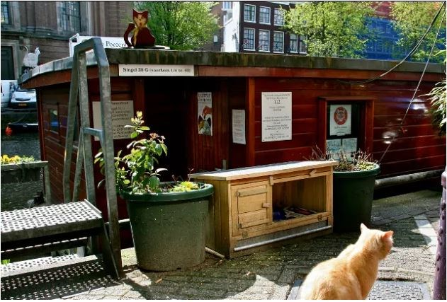 Hotdog Amsterdam Meet The Cat Boat: Amsterdam's Floating Sanctuary For Cats