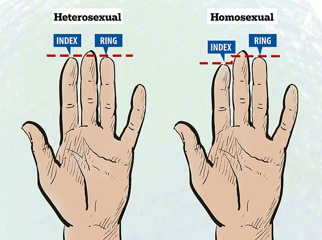 Length of your ring and index fingers \u0027could reveal your sexuality
