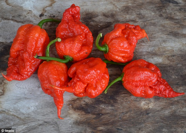 Carolina Reaper peppers grown in UK could be even spicier and hotter