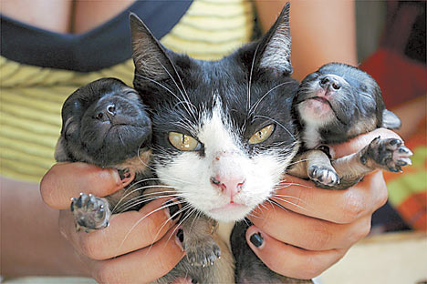 Did This Cat Breed With A Dog Daily Mail Online