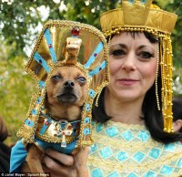 Halloween dog costumes: Pooches dressed to impress for ...